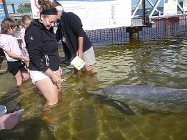 Een wilde dolfijn voeren